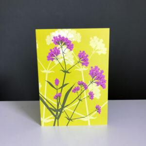 Verbena bonariensis Greeting Card