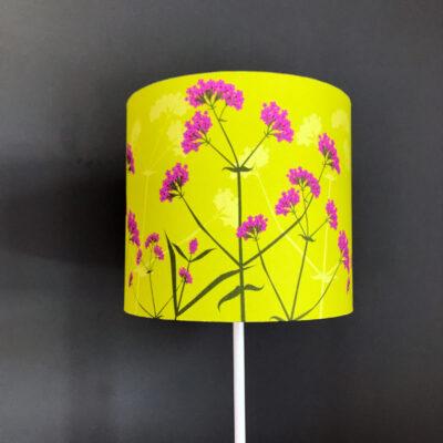 Verbena bonariensis lampshade
